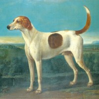 Tapster, 2nd Duke of Richmond's Favourite Hound
