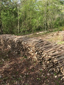 Hazel coppicing at the Weald & Downland Museum